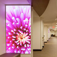 A Light Touch: Healing Design at the Mother Baby Center